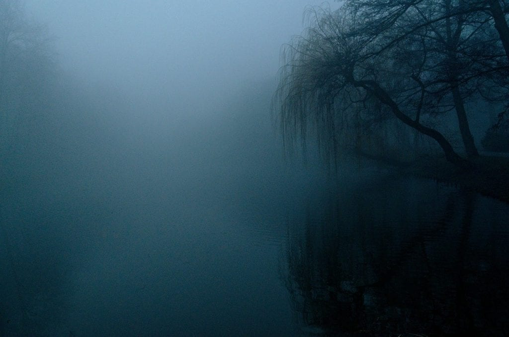 the fog, dark, nature